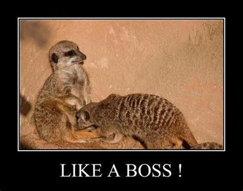 Like A Boss Meme - fubarfarm2 like a boss ii
