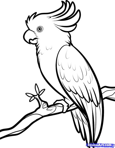 drawing sheets how to draw a cockatoo step by step birds animals free online drawing tutorial added by
