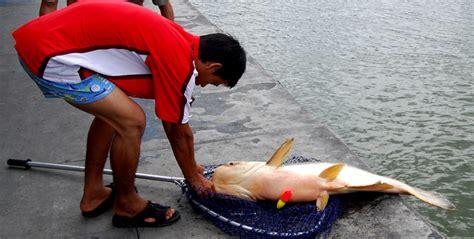 Cat Fish Untuk Curan Umpan Lele pemancingan fish sudah ada di indonesia jangan mau kalah dengan thailand kabar mancing