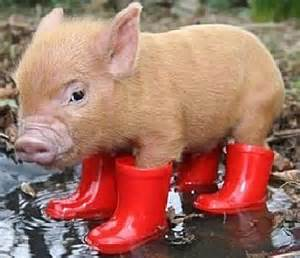 bear paw boots black friday sale pig boots baby animal zoo