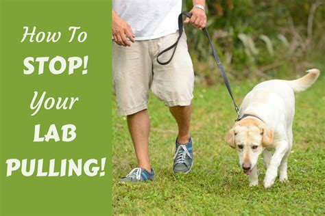 how to leash my leash walking how to stop your pulling on leash