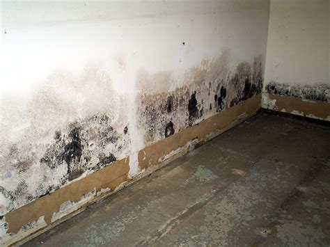 basement mold basement mold mildew removal