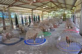 Jamu Ayam Bangkok Mbah Gober jamu menambah tenaga pukulan ayam bangkok situs ayam