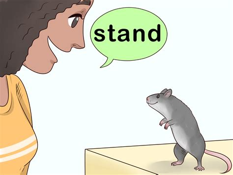 train  rat  stand   hind legs  steps