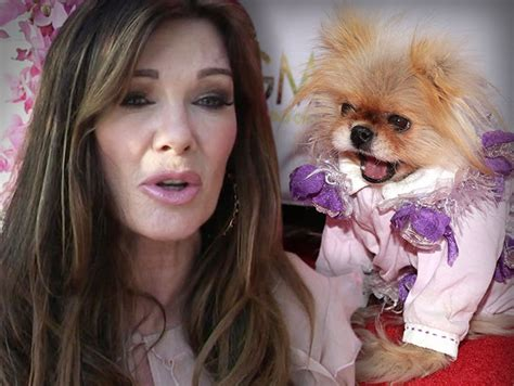 vanderpump dogs vanderpump sued for giggy tmz