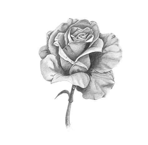 imagenes de rosas en 3d a lapiz im 225 genes de dibujos de rosas a l 225 piz imagui