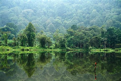 Karet Di Lung Waving The Redd Flag In Indonesia S Forests Blogal