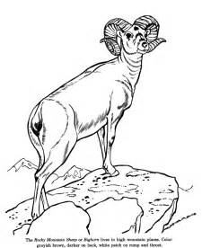 realistic animal coloring pages realistic coloring pages of animals coloring home