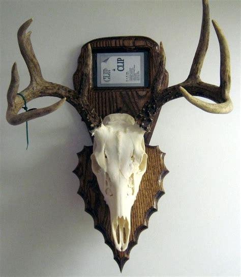european plaque template deer antler mounting plaque template best deer photos