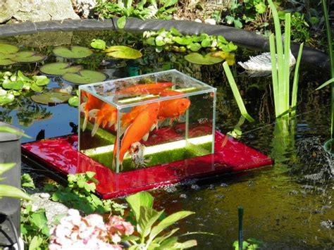 aquarium pond design flying aquarium above the water floating koi goldfish