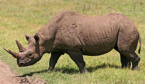 imagenes animales en peligro de extincion im 225 genes de animales en peligro de extinci 243 n
