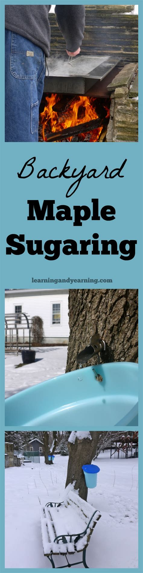 backyard maple sugaring backyard maple sugaring outdoor goods
