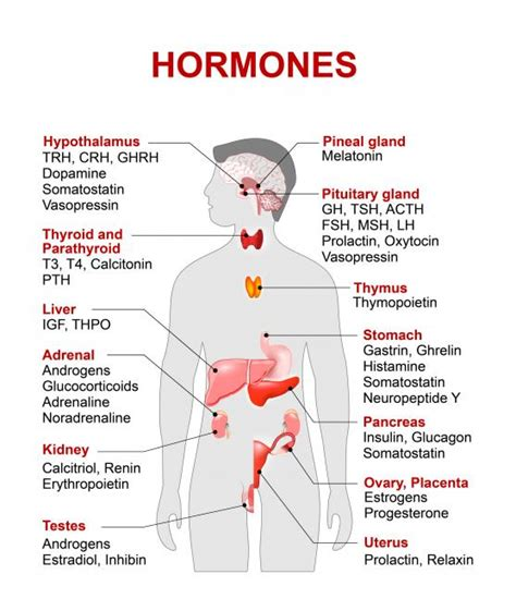 Has Trouble Detoxing Estrogen Endometriosis by How Does Your Liver Can Cause Hormone Imbalance
