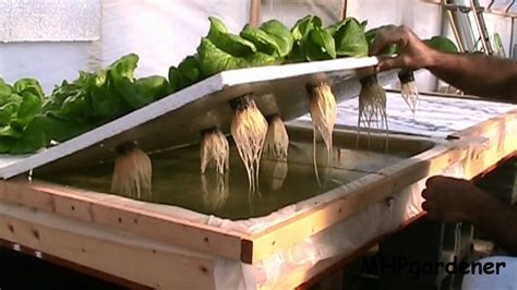 Floating Raft Hydroponics Update Dec 2012   YouTube
