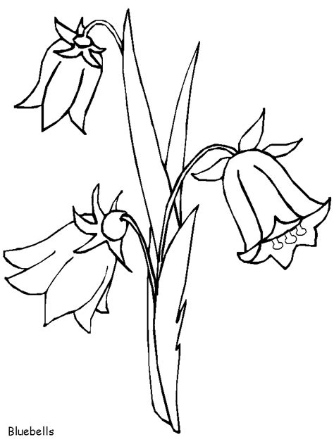 coloring pages of australian flowers mavi 199 an 199 i 231 eği boyama
