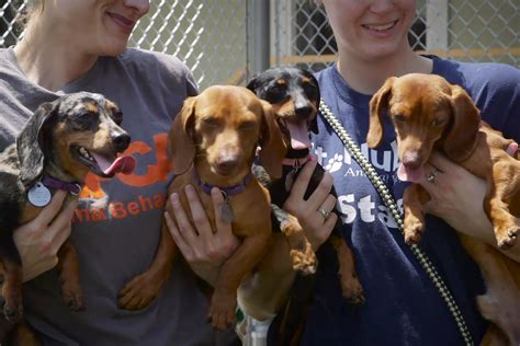 second chance dogs second chance dogs offering traumatized dogs a saving second chance