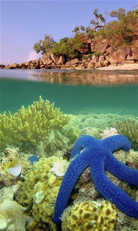 coral reef  wallpaper wallpapersafari