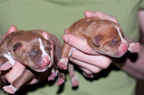 imagenes animales recien nacidos fotograf 237 as de perritos adorables imagenes de gatitos