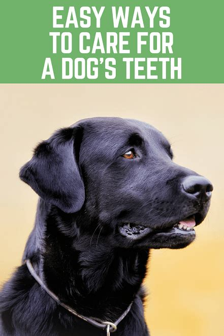 easy dogs to take care of what is the best way to take care of your s teeth thatmutt