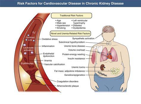 protein kidney disease cardiovascular disease in chronic kidney disease
