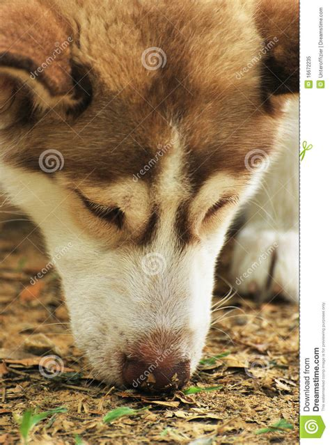 sniff royalty free stock photo image 16672235
