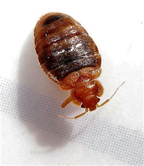bed bug lawsuit major settlement reached in des moines class action bedbug