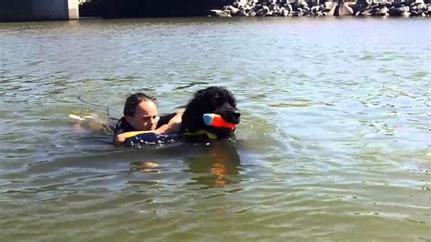 water rescue dogs child water rescue service dogs
