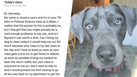 brings puppies to owner student brings to class during hurricane irma evacuation