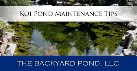 koi pond maintenance tips the backyard pond