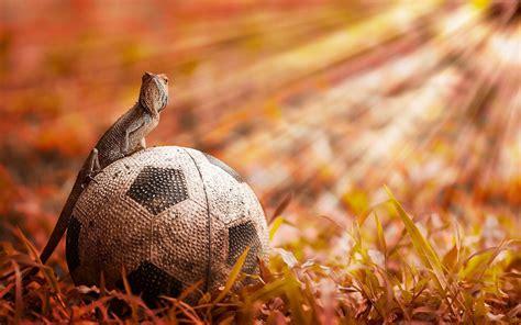 animals soccer lizards fussball balls football futbol