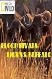 watch national geographic blood rivals: lion vs. buffalo