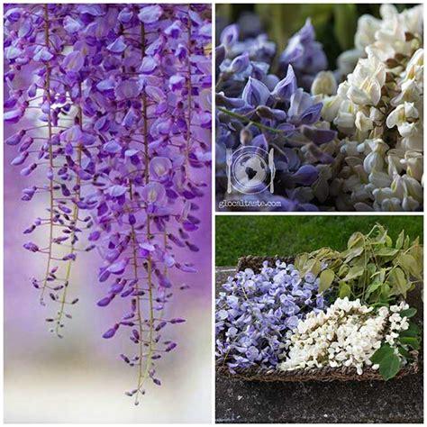 fiore glicine confetture insolite marmellata di fiori di acacia e