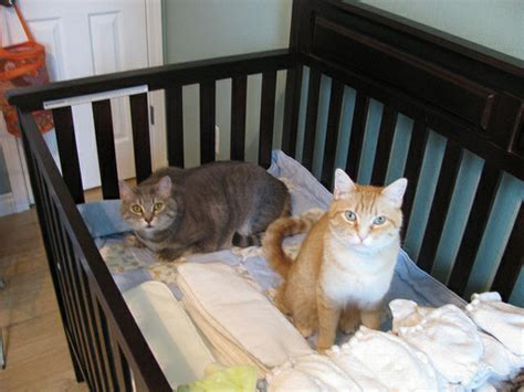 Cat Proof Baby Crib What S Up With The Superiority Complex Some Human Parents Pet Parents Catster