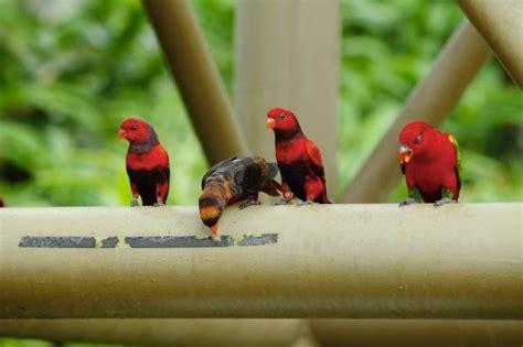 Tempat Makan Burung Kakak Tua taman burung tempat menarik di melaka tempat menarik
