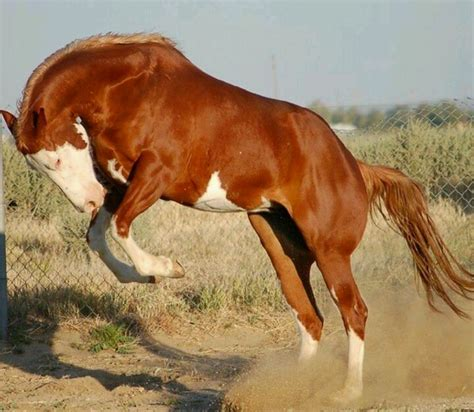 1000 images about horse party on pinterest horse pinto horse horses pinterest dressage horses we