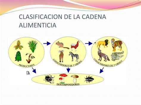 cadenas troficas clasificacion concepto la cadena alimenticia es el traspaso de energ 237 a
