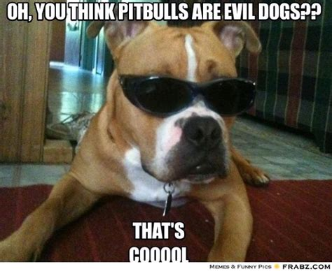 Pitbull Memes - hmmmm pitbull dontjudge ilovedogs certapet