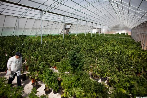grow house the fort knox of marijuana in michigan presents new
