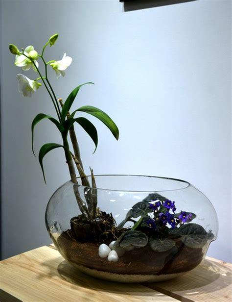 orchid terrarium   bangalore delivery
