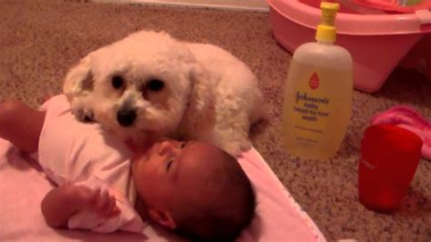 protects puppy protects baby from dryer 1funny