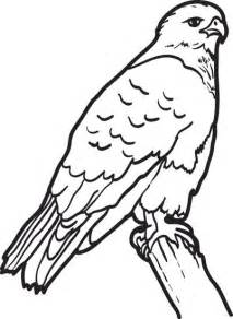hawk coloring pages free printable hawk coloring page for