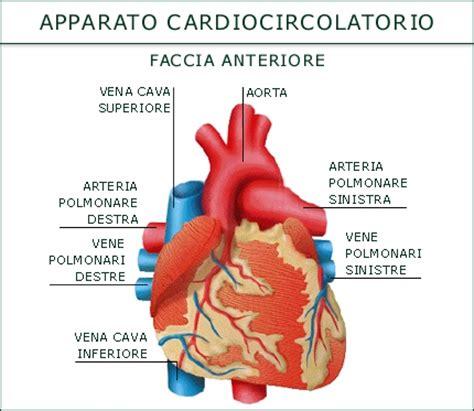 malattie cuore e dei vasi l apparato cardio circolatorio cuore polmoni e cervello