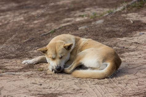 how much sleep does a 4 month puppy need sleep stock photo 169 shiero2546 35786565