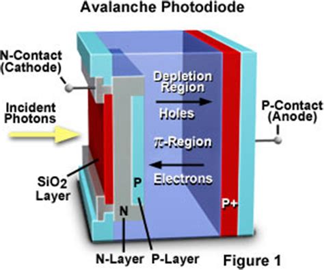 pin diode vs avalanche photodiode molecular expressions microscopy primer digital imaging in optical microscopy concepts in