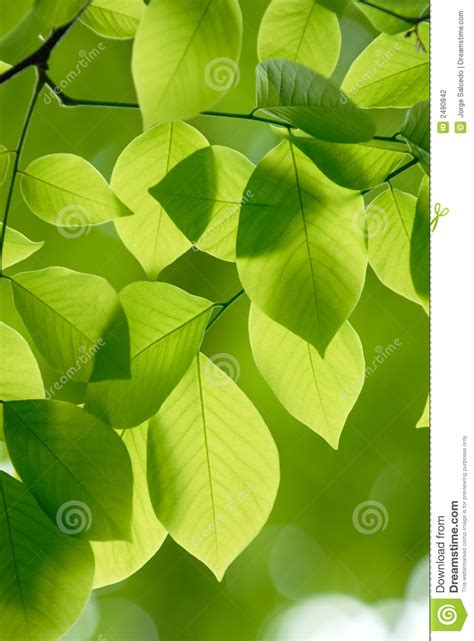 leaf pattern photography green leaves pattern backgroun stock photo image 2490842