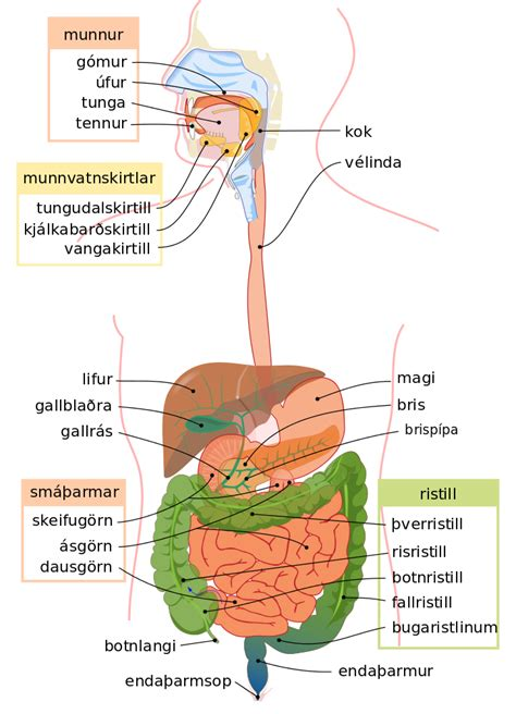 it system diagram file digestive system diagram is svg the free