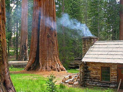 Cabins In The Redwoods Ca by House Of The Day Redwood Forest Cabin