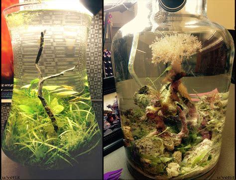 tech desktop aquarium jars  salt