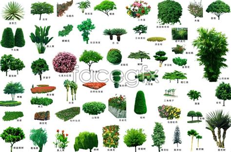 landscaping trees psd free download