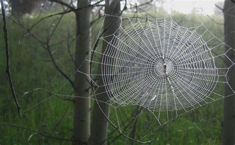 Spider Web worship setting my inner child free diana gleaton